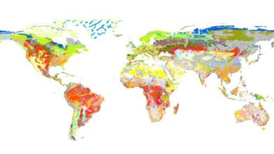 Photo of شيب فايل تربة العالم  مقياس 5 مليون – الفاو